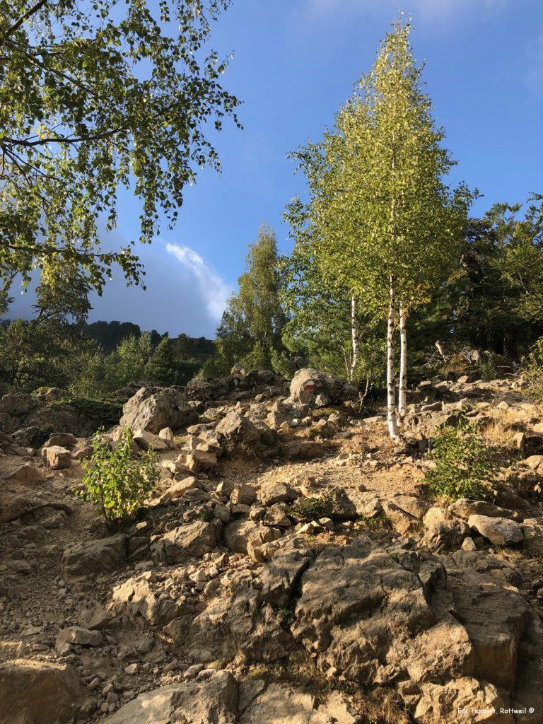 Der Anstieg ist steil und anspruchsvoll, bei dem starken Wind wird man in der Serpentine immer wieder nach vorn geschoben oder zurück gedrückt