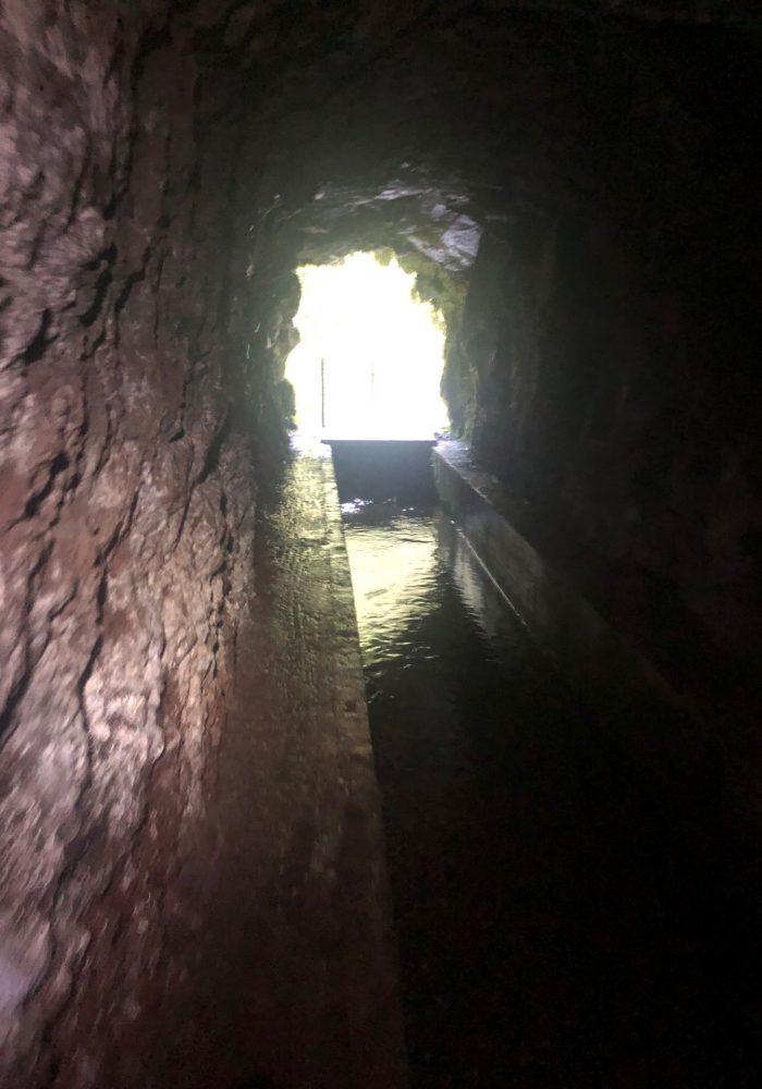 Einer der Tunnel auf dem Levada da Faja do Rodrigues