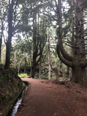 Entlang der Levada zun Caldeirao Verde