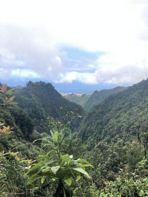 """Mitten im grünen """"Dschungel"""" von Madeira"""