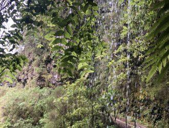 Mitten durch die grüne, üppige Vegetation