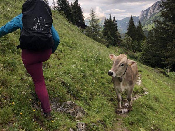 Die letzten Meter bis zur Hundsteinhütte