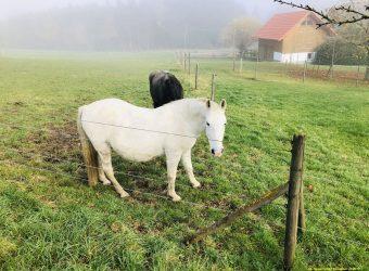 Eine Pferdekoppel beim Höchsten