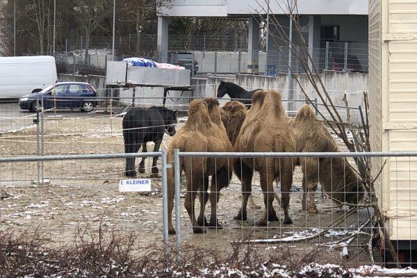 Die Tiere des Zoos auf dem Gelände des ehemaligen Autohauses
