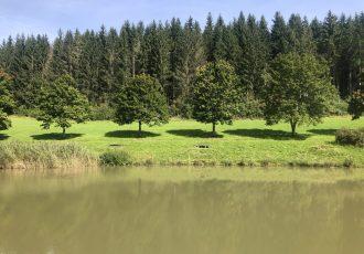 Teich bei der Fischerhütte in Gosheim