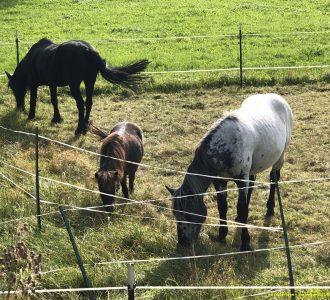 Pferdekoppel bei Oberschwandorf